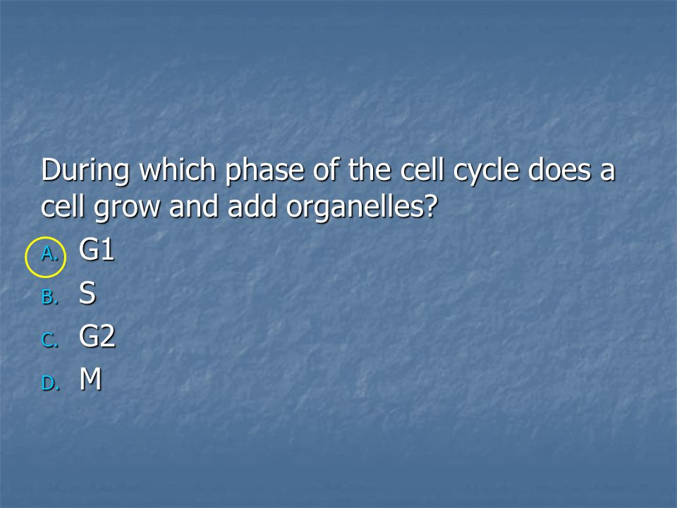 During which phase of the cell cycle does a cell grow and add organelles
