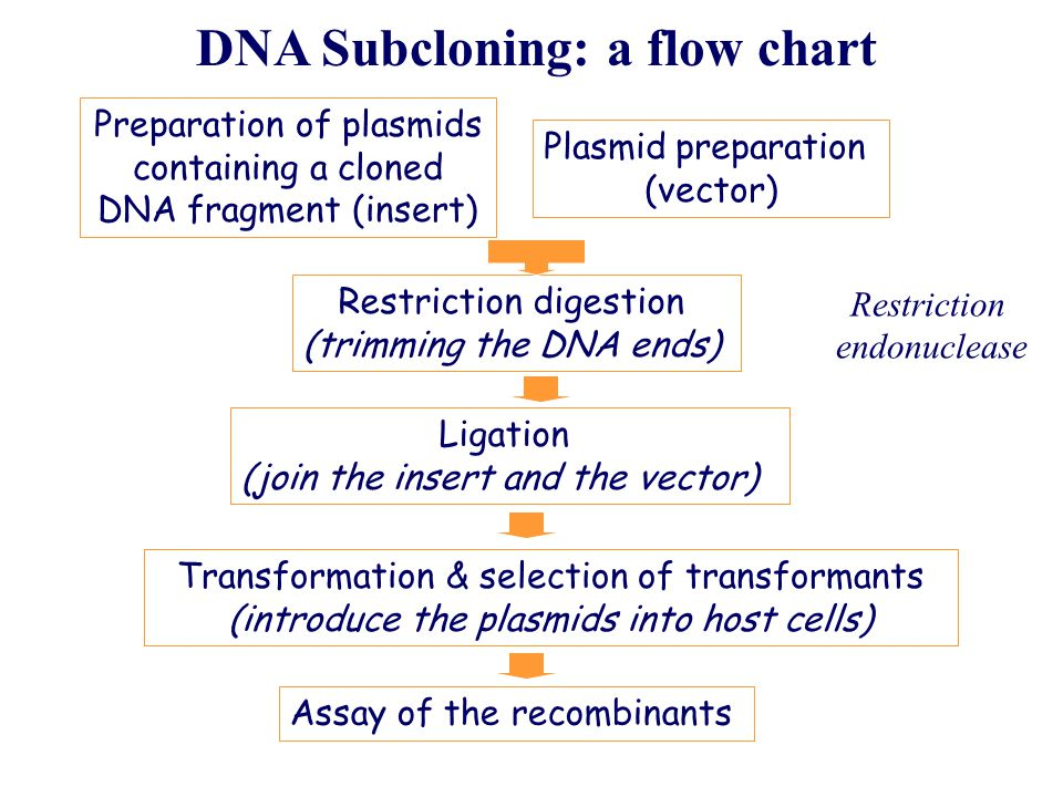 DNA Subcloning: a flow chart