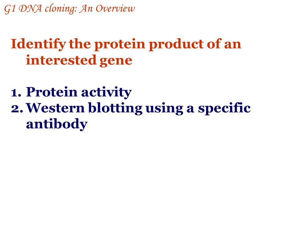 Identify the protein product of an interested gene