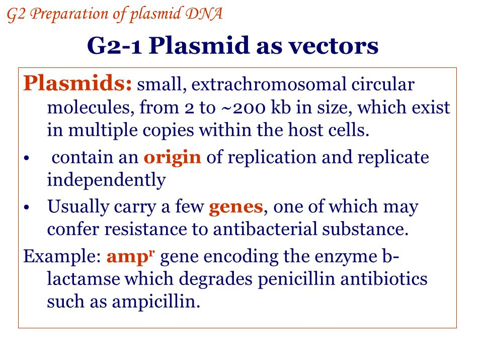 G2 Preparation of plasmid DNA