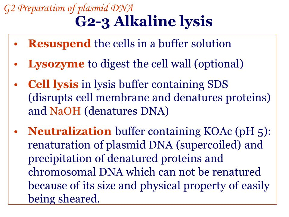 G2-3 Alkaline lysis G2 Preparation of plasmid DNA