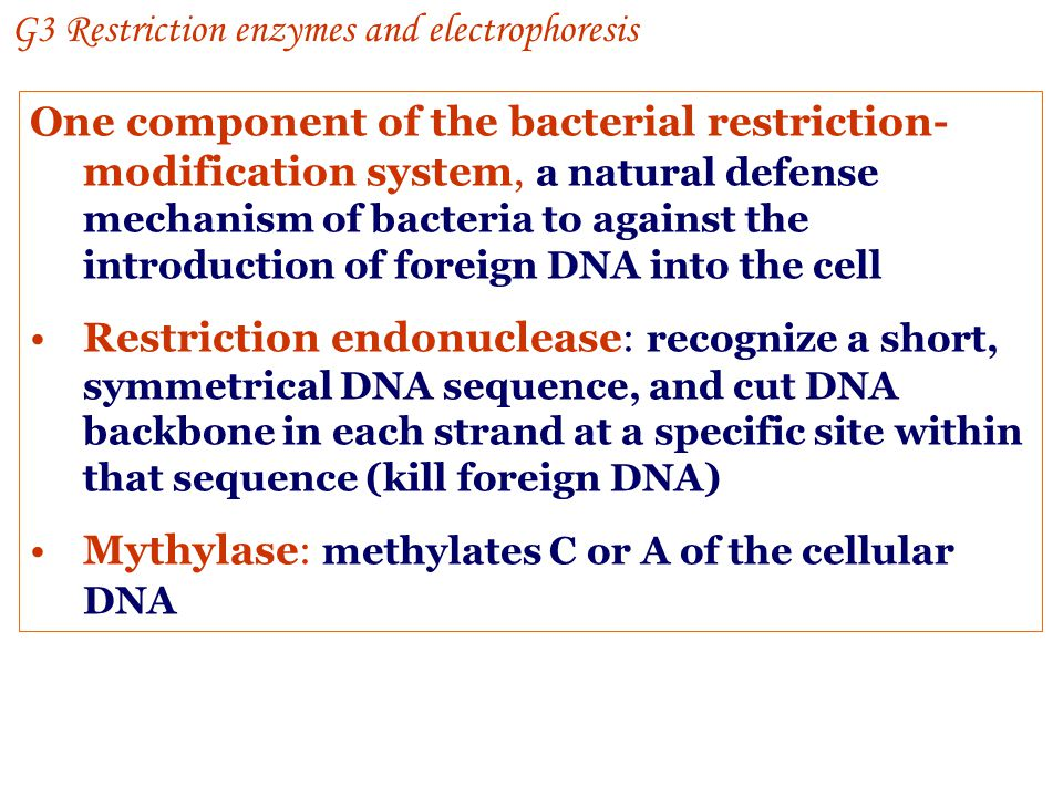 G3 Restriction enzymes and electrophoresis