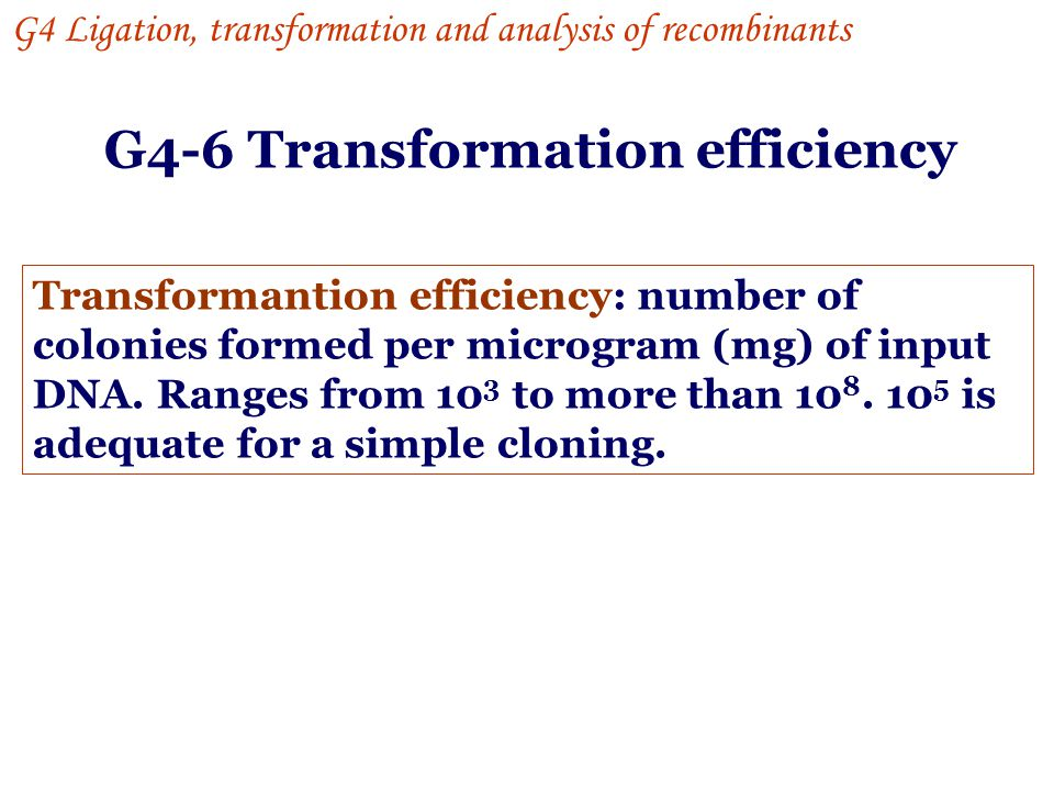 G4-6 Transformation efficiency