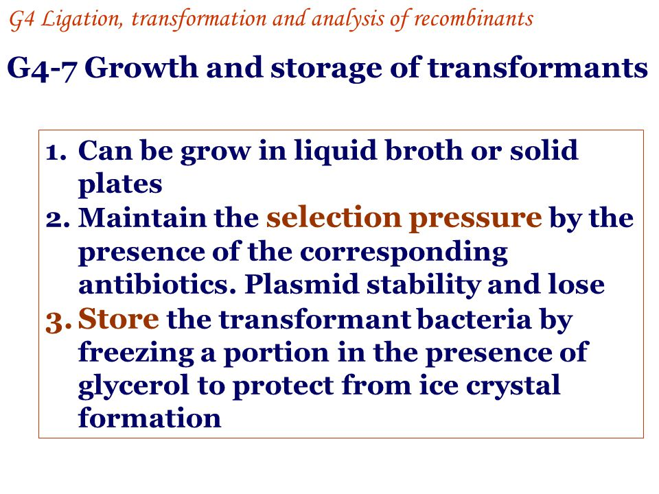 G4-7 Growth and storage of transformants