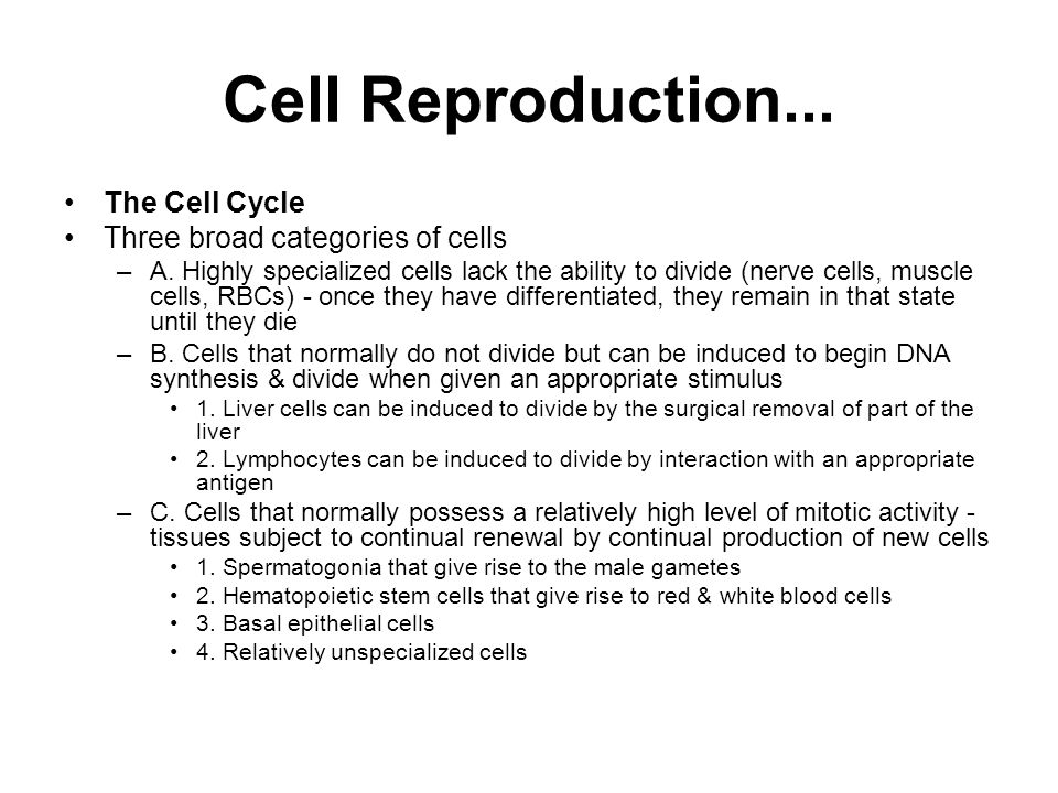 Cell Reproduction... The Cell Cycle Three broad categories of cells
