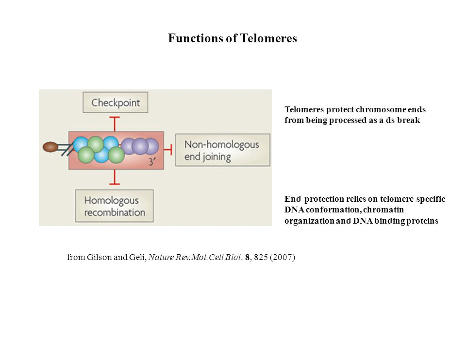 Functions of Telomeres