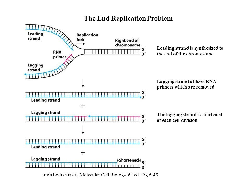 The End Replication Problem