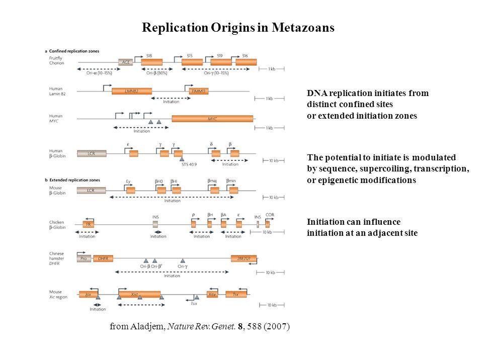 Replication Origins in Metazoans