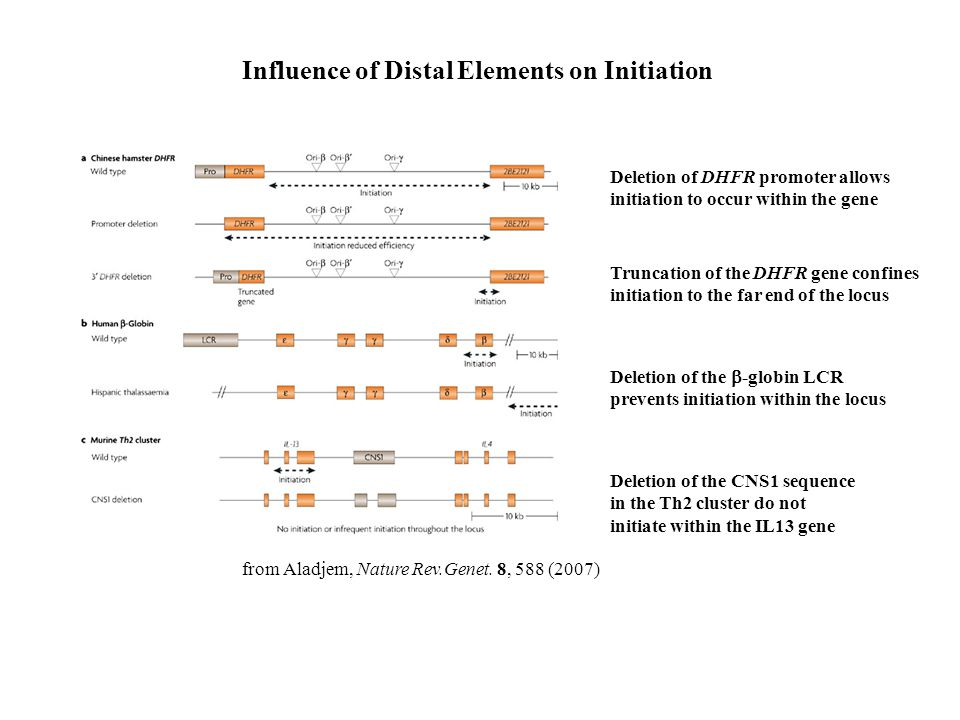 Influence of Distal Elements on Initiation
