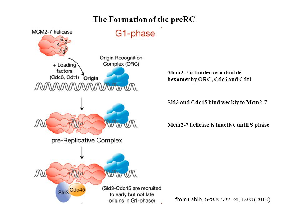 The Formation of the preRC