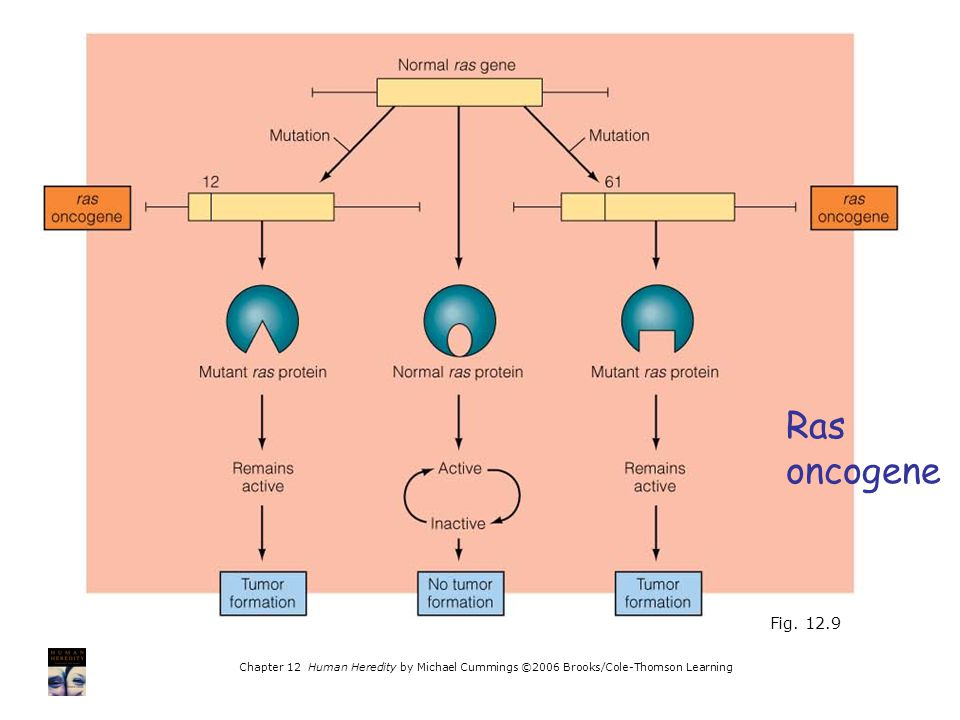 Ras oncogene. Fig