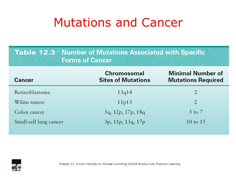 Mutations and Cancer Chapter 12 Human Heredity by Michael Cummings ©2006 Brooks/Cole-Thomson Learning.