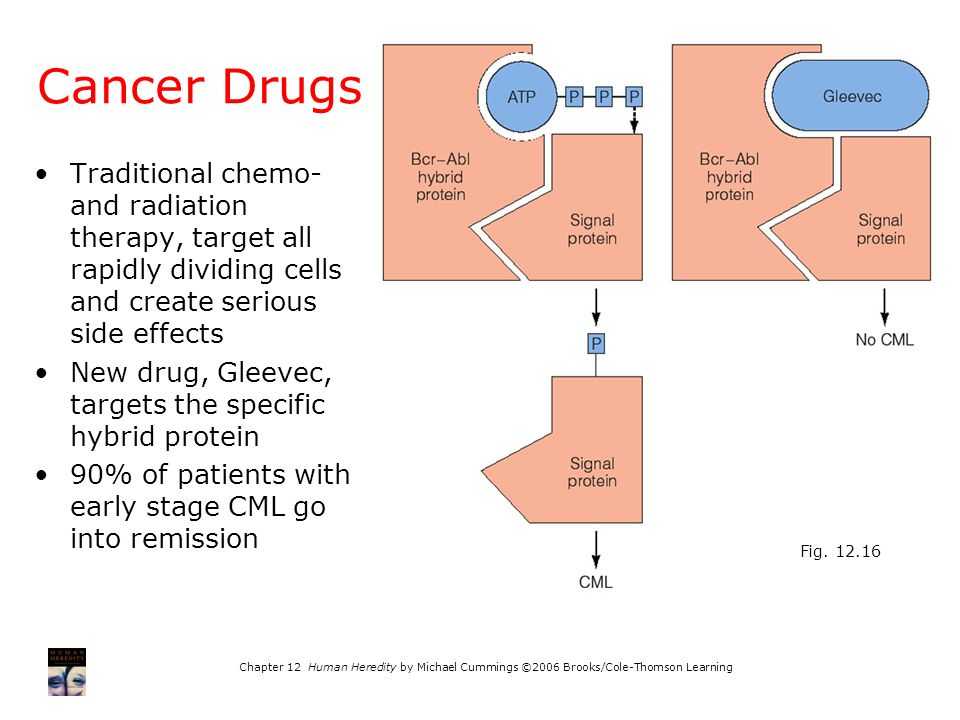 Cancer Drugs Fig. 12.16. Traditional chemo- and radiation therapy, target all rapidly dividing cells and create serious side effects.