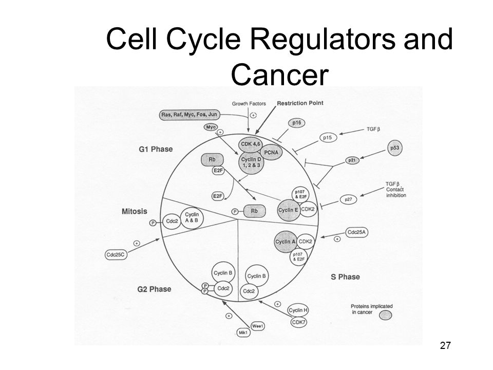 Cell Cycle Regulators and Cancer