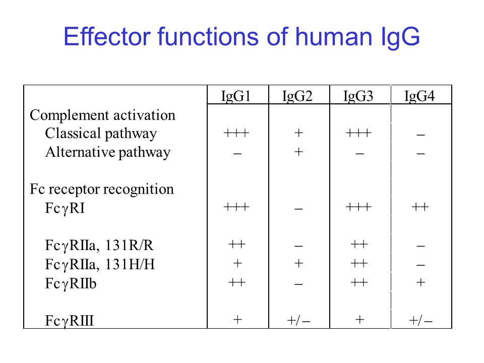 Effector functions of human IgG