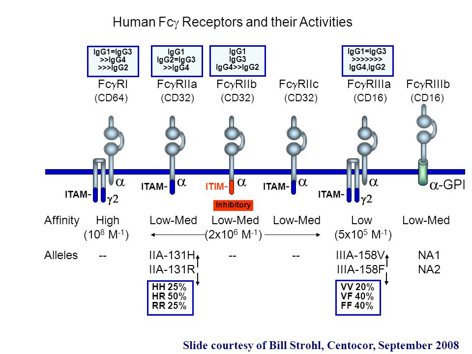 a a a a a a-GPI Human Fcg Receptors and their Activities