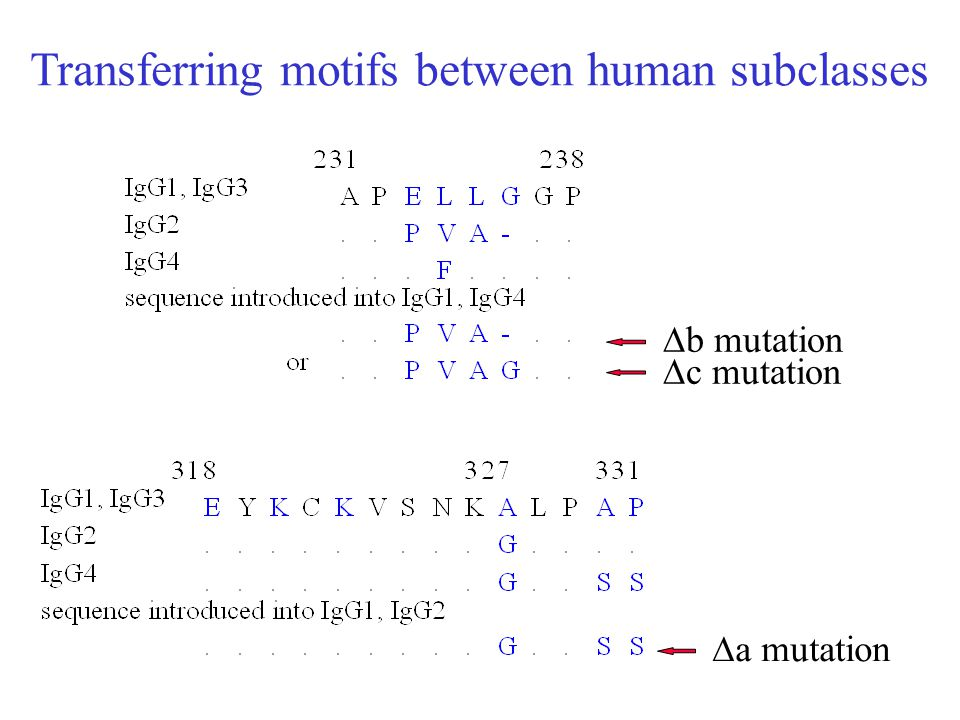Transferring motifs between human subclasses