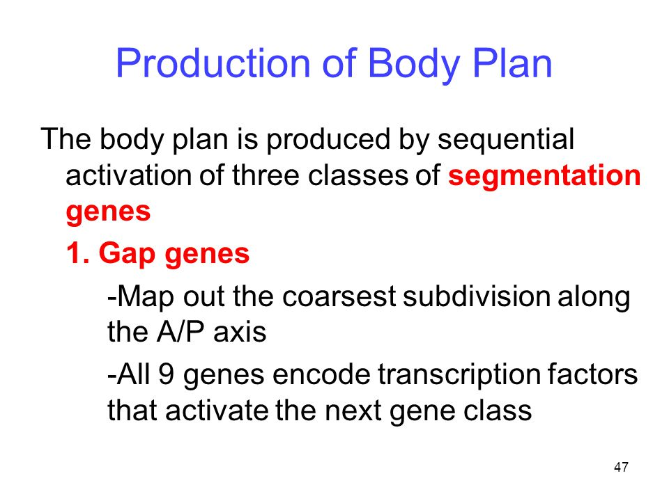 Production of Body Plan