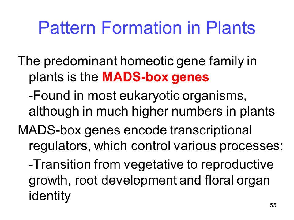 Pattern Formation in Plants