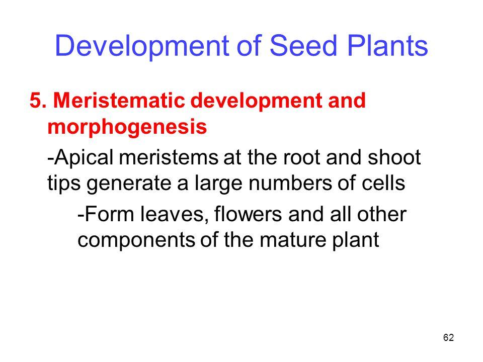 Development of Seed Plants
