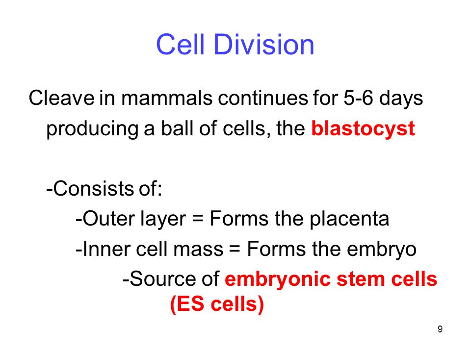 Cell Division Cleave in mammals continues for 5-6 days