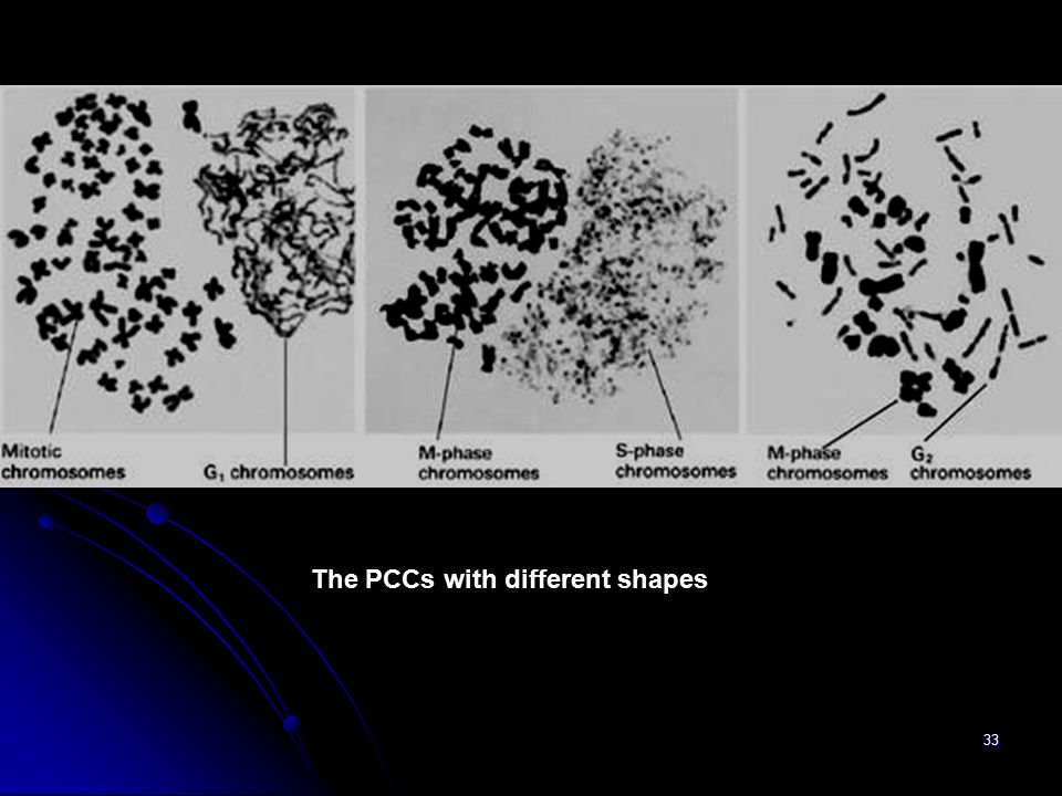 The PCCs with different shapes