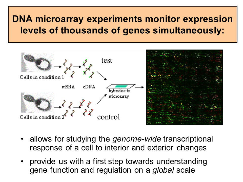 DNA microarray experiments monitor expression levels of thousands of genes simultaneously: