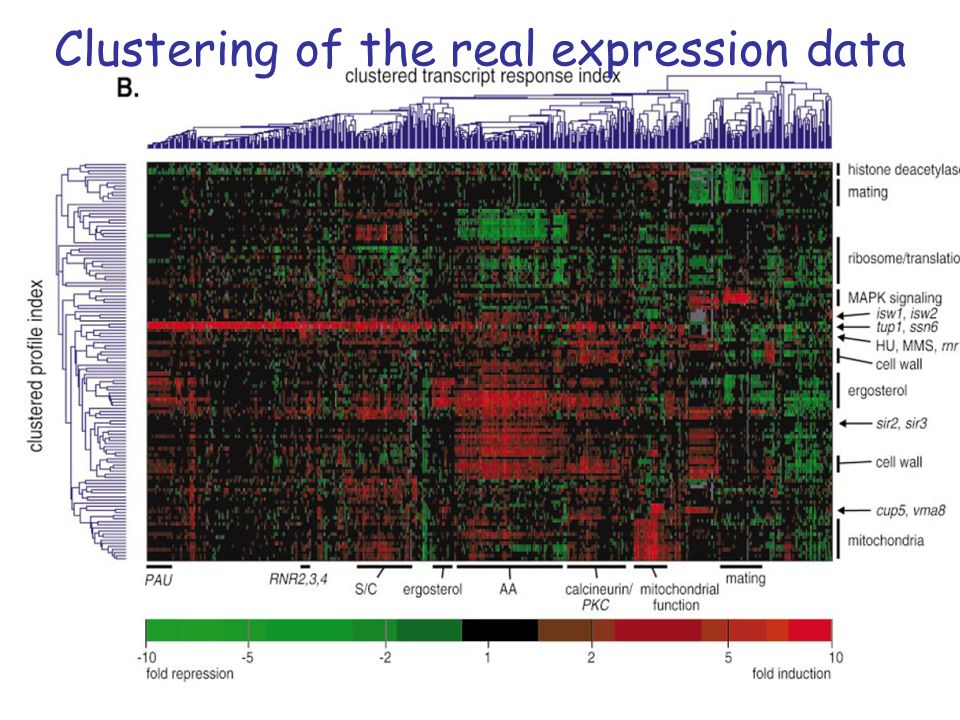 Clustering of the real expression data