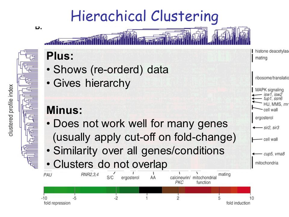 Hierachical Clustering
