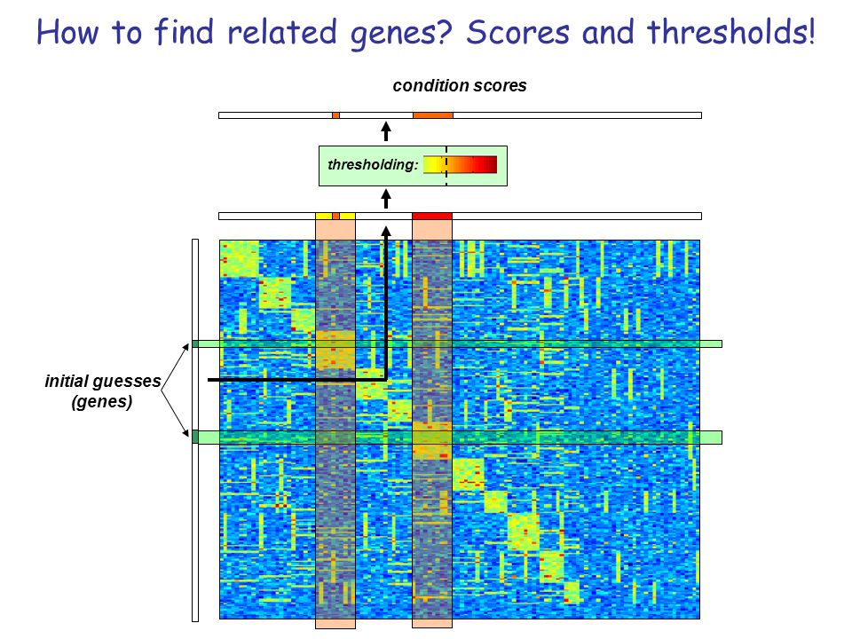 How to find related genes Scores and thresholds!