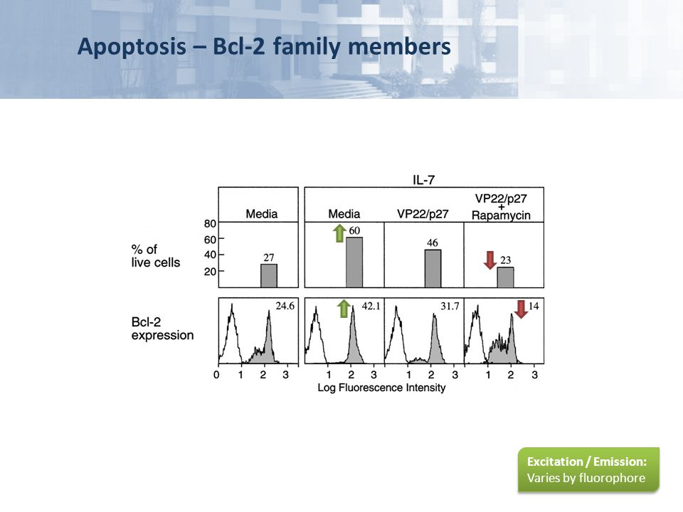 Apoptosis – Bcl-2 family members