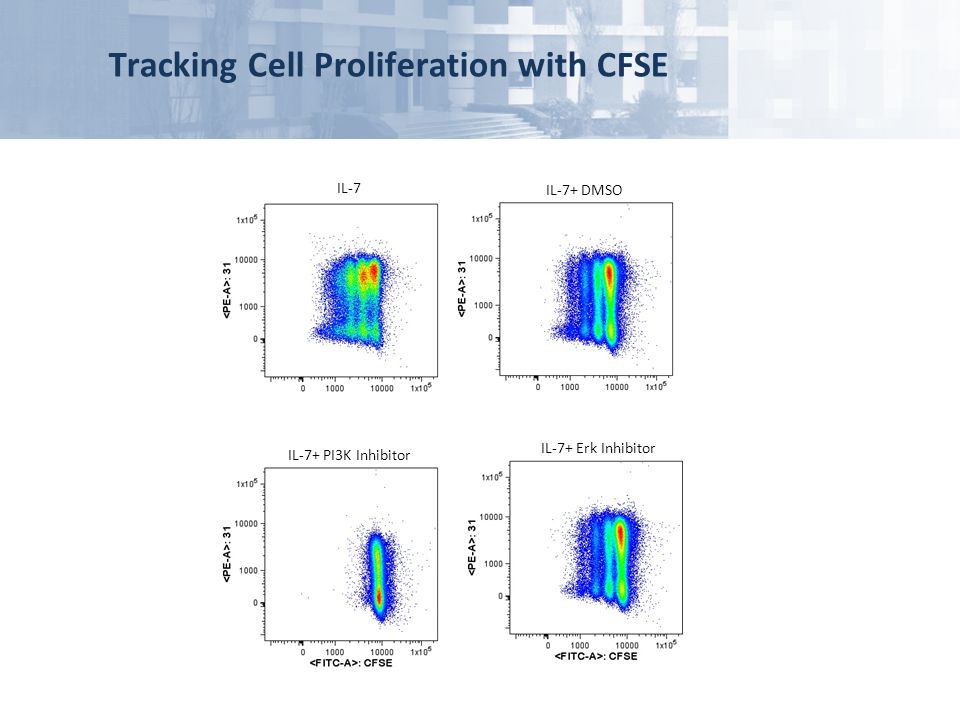 Tracking Cell Proliferation with CFSE