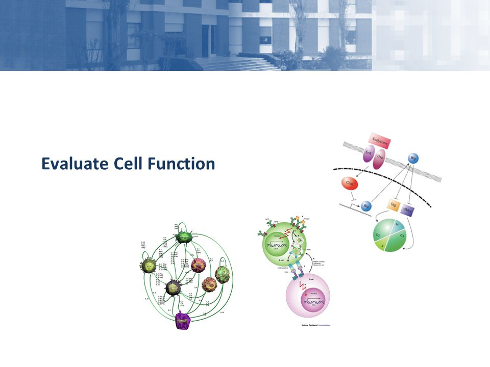 Evaluate Cell Function