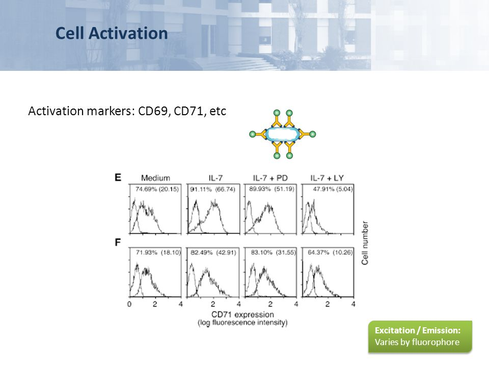 Cell Activation Activation markers: CD69, CD71, etc