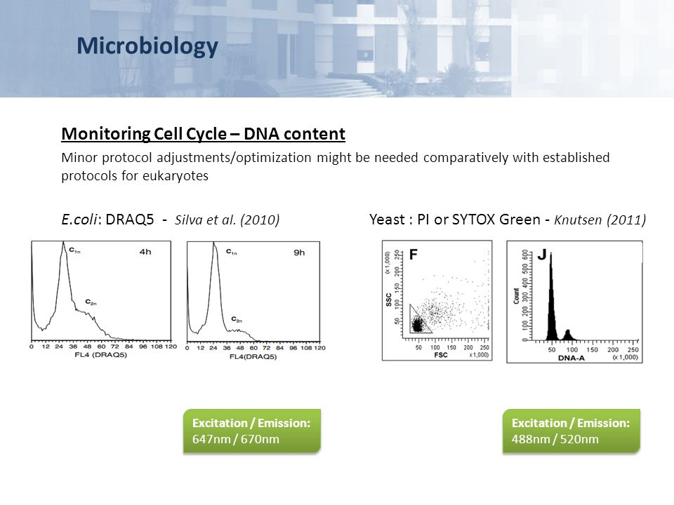 Microbiology Monitoring Cell Cycle – DNA content