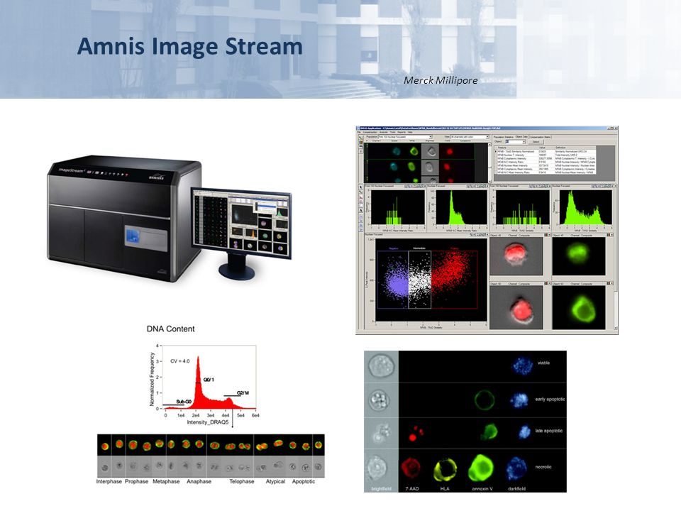 Amnis Image Stream Merck Millipore