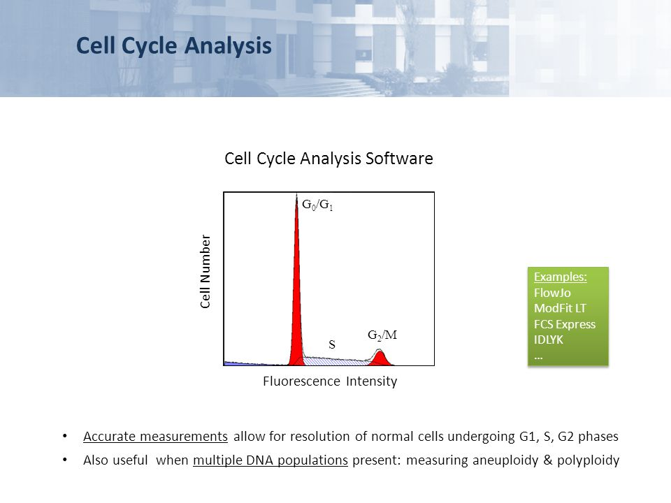 Cell Cycle Analysis Cell Cycle Analysis Software Cell Number
