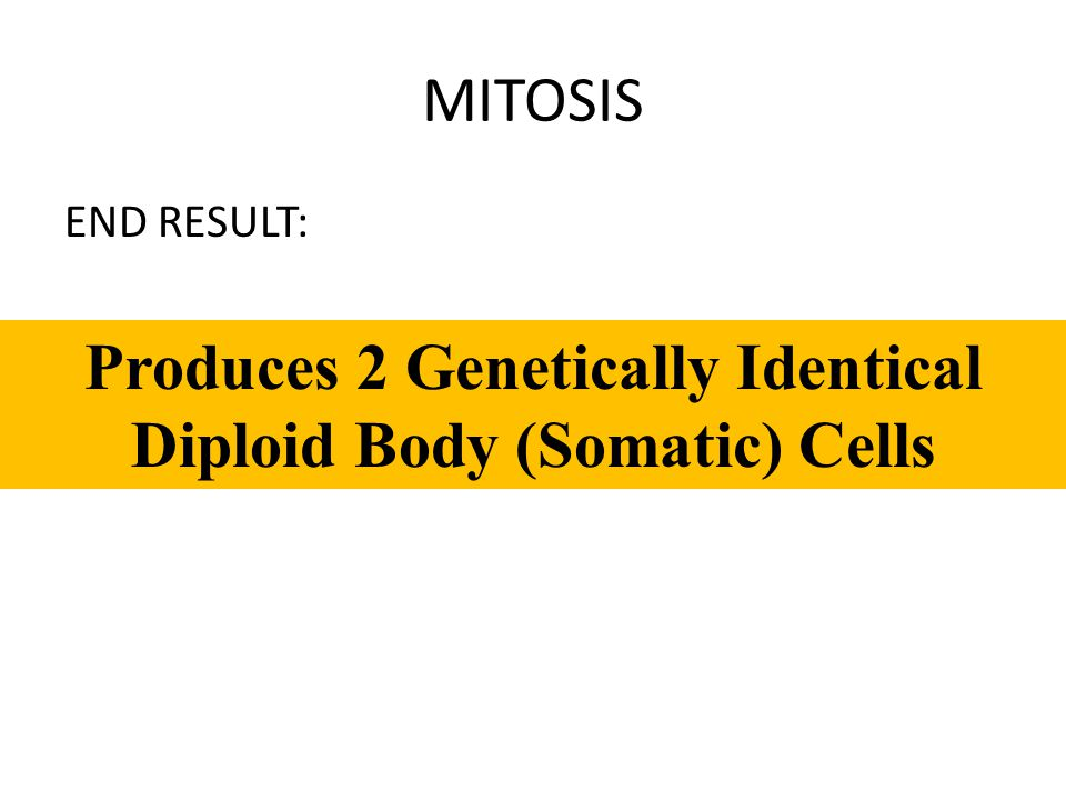 Produces 2 Genetically Identical Diploid Body (Somatic) Cells