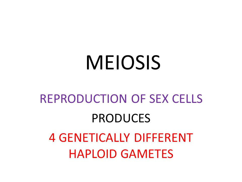 MEIOSIS REPRODUCTION OF SEX CELLS PRODUCES
