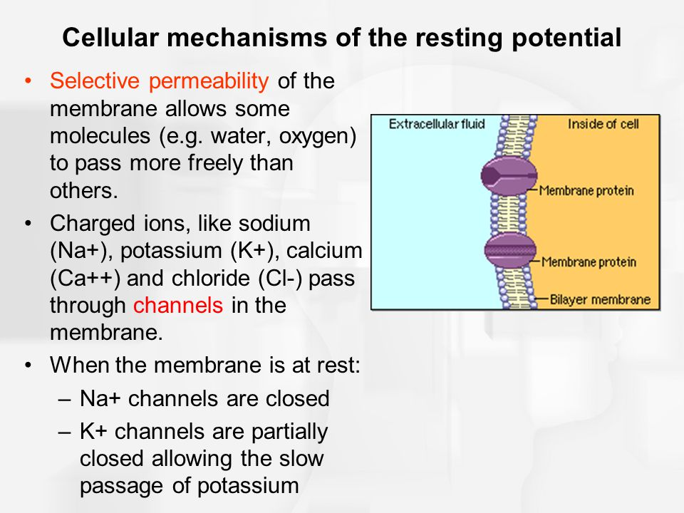 Cellular mechanisms of the resting potential