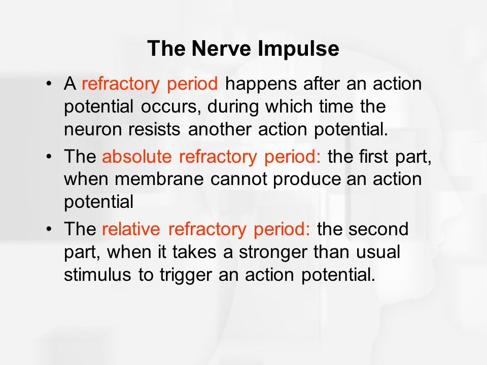 The Nerve Impulse A refractory period happens after an action potential occurs, during which time the neuron resists another action potential.