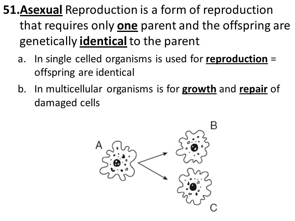 Asexual Reproduction is a form of reproduction that requires only one parent and the offspring are genetically identical to the parent