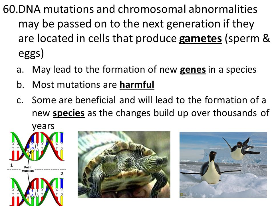 DNA mutations and chromosomal abnormalities may be passed on to the next generation if they are located in cells that produce gametes (sperm & eggs)