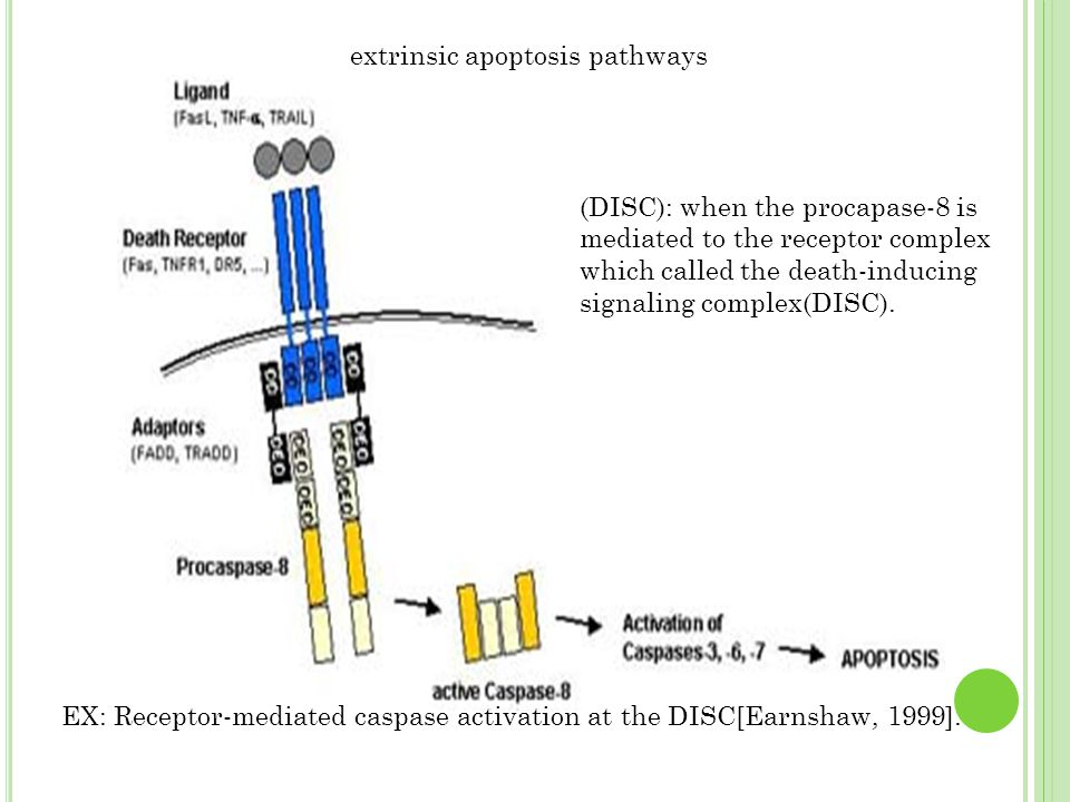 extrinsic apoptosis pathways