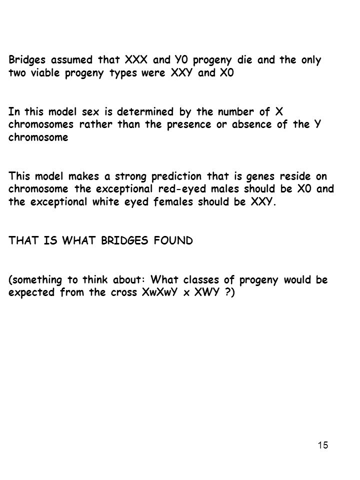 Bridges assumed that XXX and Y0 progeny die and the only two viable progeny types were XXY and X0