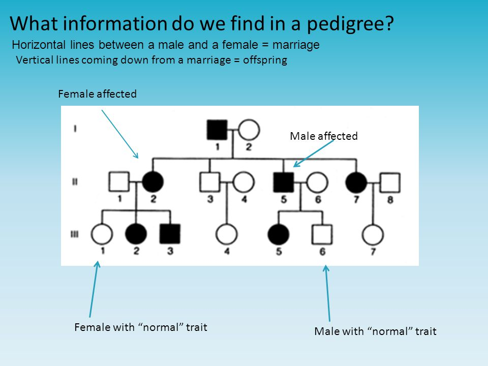 What information do we find in a pedigree