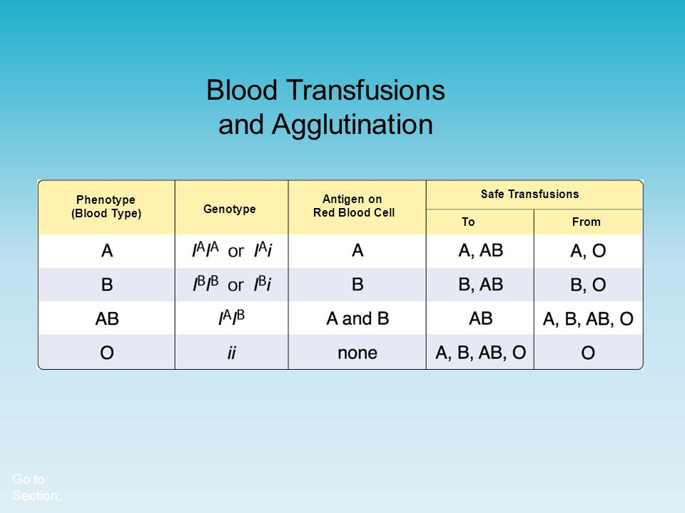 Blood Transfusions and Agglutination
