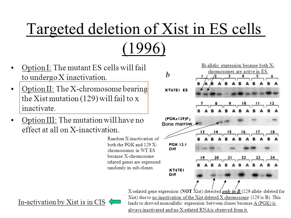 Targeted deletion of Xist in ES cells (1996)