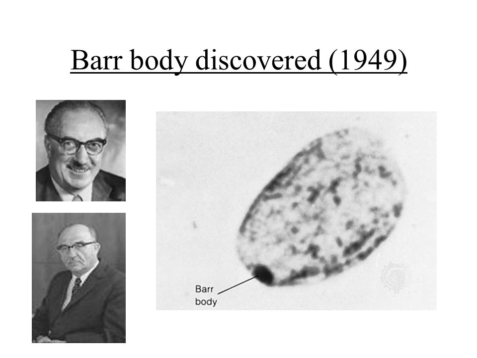 Barr body discovered (1949)