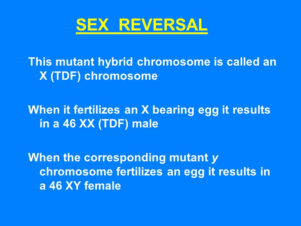 SEX REVERSAL This mutant hybrid chromosome is called an X (TDF) chromosome. When it fertilizes an X bearing egg it results in a 46 XX (TDF) male.